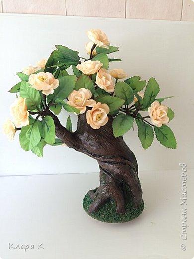розовое дерево фото 11