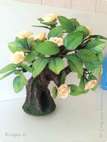 розовое дерево фото 10