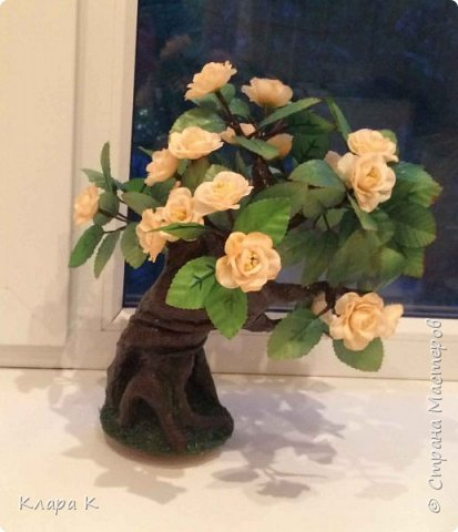 розовое дерево фото 9