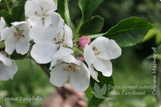 Девочки,так увлеклась маками,что времени не было отснять веточки яблони,хотя собрала их уже несколько дней назад.Исправляюсь) фото 4