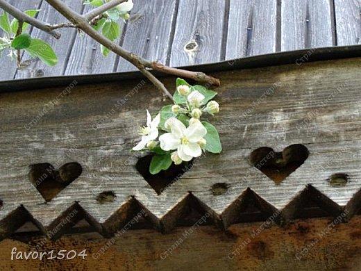 Решила пофотографировать как цветут деревья и кустарники... вот такие цветы на груше - обратите внимание - тычинки красно-розового цвета.... фото 10