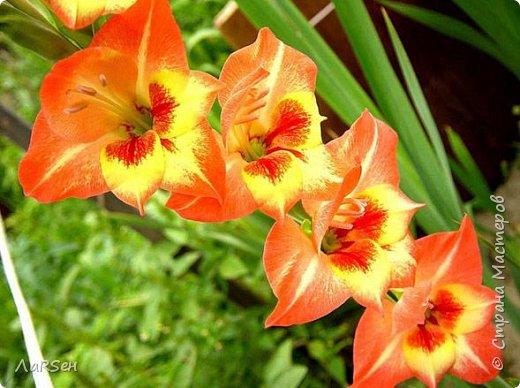 Первые гладиолусы и лён. Была просьба сделать оранжевые цветы. Показалось грустно одни гладиолусы и добавила цветов льна.  фото 8