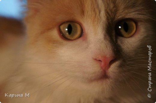 котики муркотики это  Анфиса и Васенька. Фисе 6 лет, Васе нет ещё и года. Но по весу он уже перегнал Анфису) Что такое красота?Это дом, где два кота))  фото 19