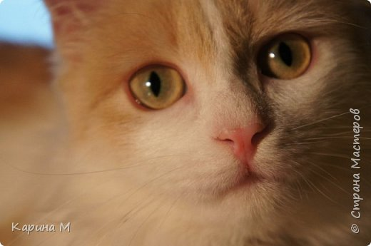 котики муркотики это  Анфиса и Васенька. Фисе 6 лет, Васе нет ещё и года. Но по весу он уже перегнал Анфису) Что такое красота?Это дом, где два кота))  фото 33