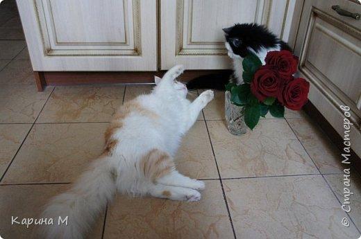 котики муркотики это  Анфиса и Васенька. Фисе 6 лет, Васе нет ещё и года. Но по весу он уже перегнал Анфису) Что такое красота?Это дом, где два кота))  фото 38