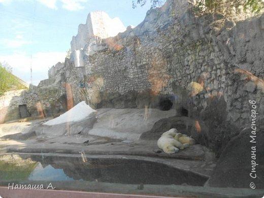 Илья, получив в руки настоящий фотоаппарат, не выпустил его и в зоопарке. У нас в Перми так же есть свой зоопарк, и мы стараемся там чаще бывать, но это было впечатляюще. Белая сова. фото 3