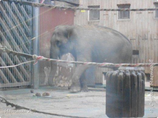 Илья, получив в руки настоящий фотоаппарат, не выпустил его и в зоопарке. У нас в Перми так же есть свой зоопарк, и мы стараемся там чаще бывать, но это было впечатляюще. Белая сова. фото 6
