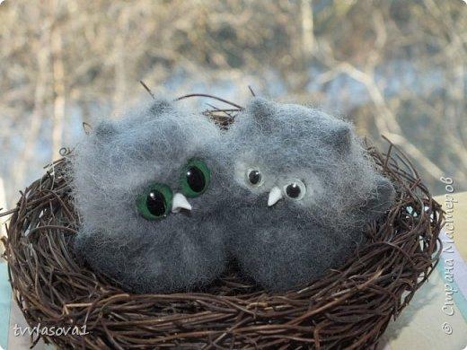 Встречайте новых малышей! Маленьких и любопытных.. фото 2