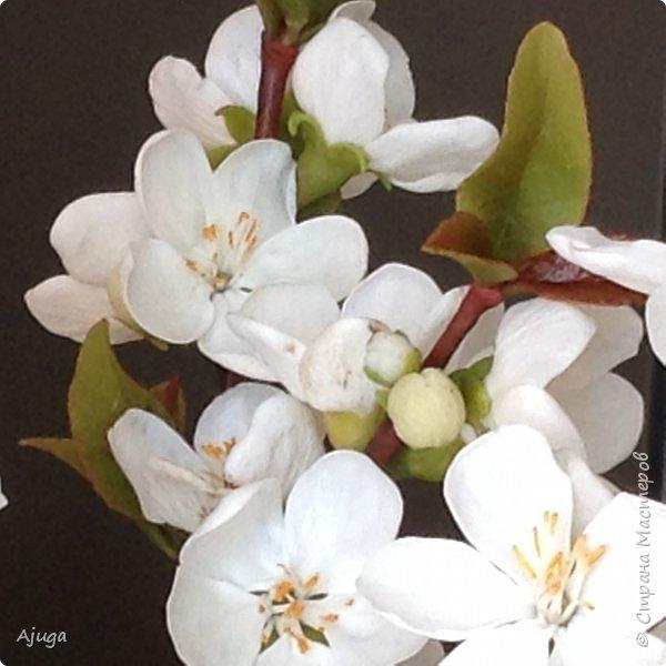 Цветущий хеномелес или Японская айва из холодного фарфора. фото 1