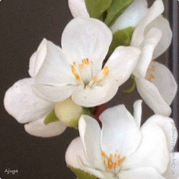 Цветущий хеномелес или Японская айва из холодного фарфора. фото 2