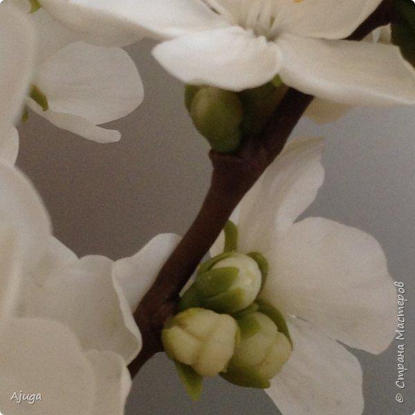 Цветущий хеномелес или Японская айва из холодного фарфора. фото 10