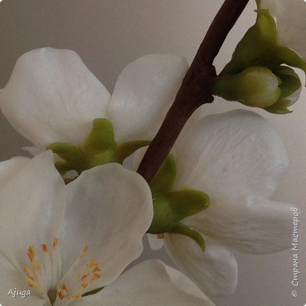 Цветущий хеномелес или Японская айва из холодного фарфора. фото 11