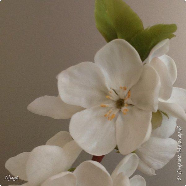 Цветущий хеномелес или Японская айва из холодного фарфора. фото 12