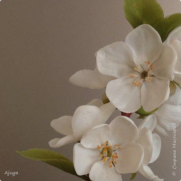 Цветущий хеномелес или Японская айва из холодного фарфора. фото 13