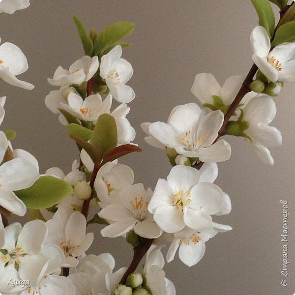 Цветущий хеномелес или Японская айва из холодного фарфора. фото 14