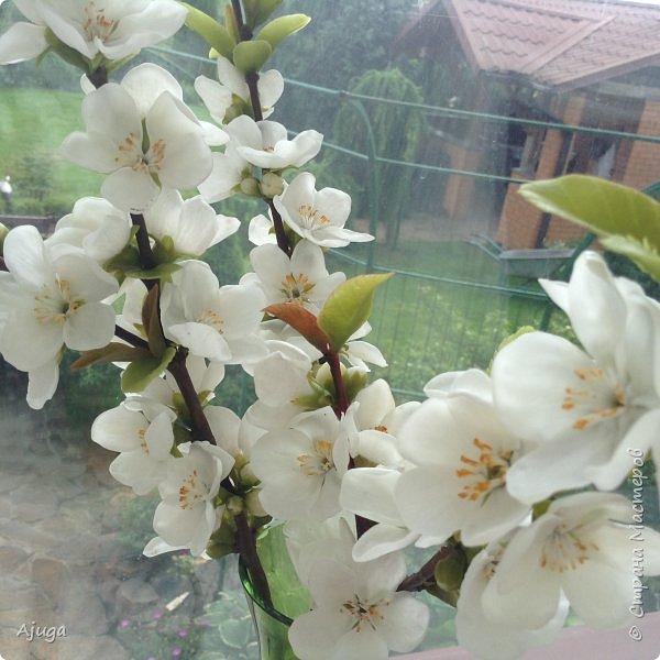 Цветущий хеномелес или Японская айва из холодного фарфора. фото 18