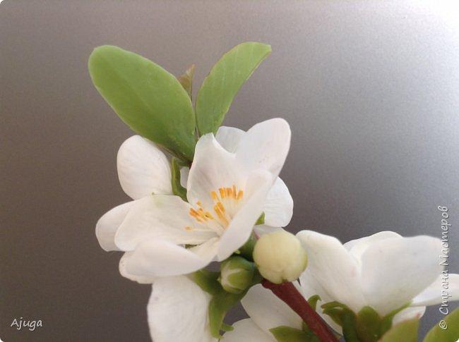Цветущий хеномелес или Японская айва из холодного фарфора. фото 19