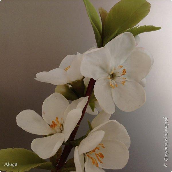 Цветущий хеномелес или Японская айва из холодного фарфора. фото 5
