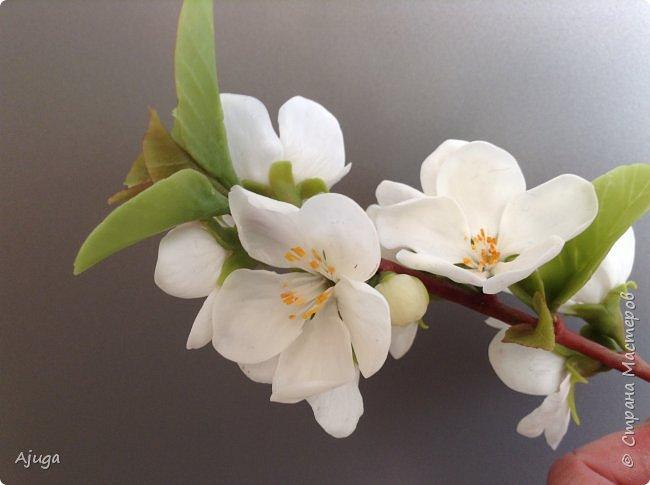 Цветущий хеномелес или Японская айва из холодного фарфора. фото 21