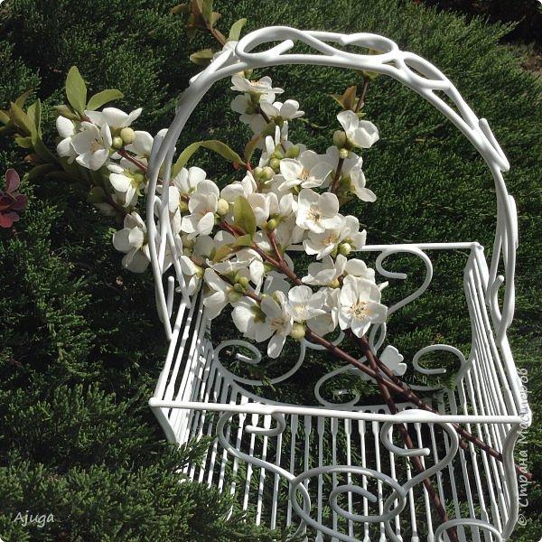 Цветущий хеномелес или Японская айва из холодного фарфора. фото 22