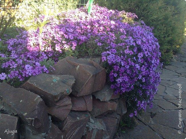 Продолжение...Прогулка по моему саду... фото 1