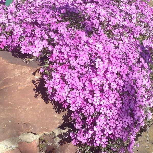 Продолжение...Прогулка по моему саду... фото 2