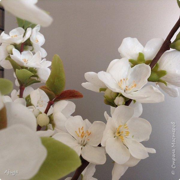 Цветущий хеномелес или Японская айва из холодного фарфора. фото 6