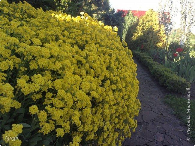 Продолжение...Прогулка по моему саду... фото 3