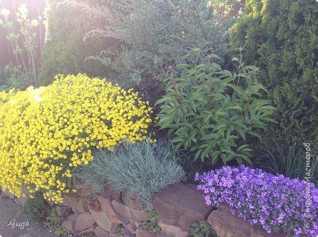 Продолжение...Прогулка по моему саду... фото 6