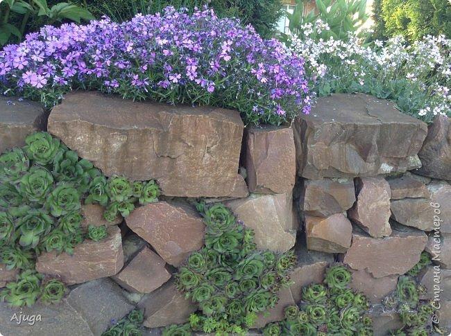 Продолжение...Прогулка по моему саду... фото 7