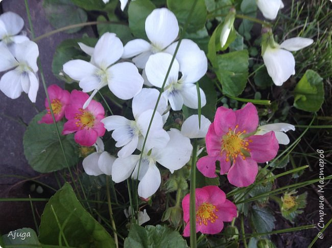 Продолжение...Прогулка по моему саду... фото 9