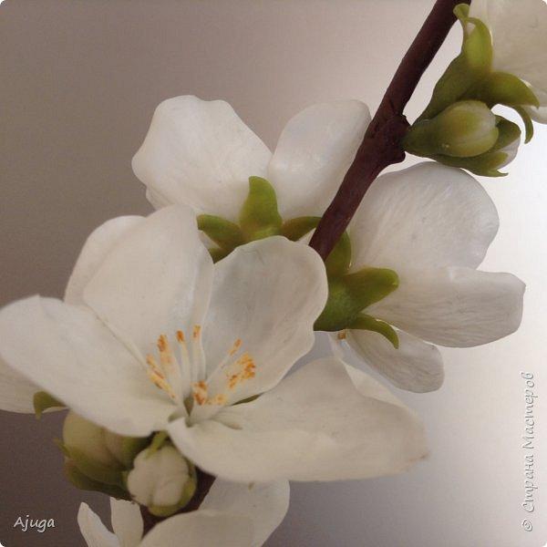 Цветущий хеномелес или Японская айва из холодного фарфора. фото 7