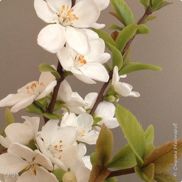 Цветущий хеномелес или Японская айва из холодного фарфора. фото 8