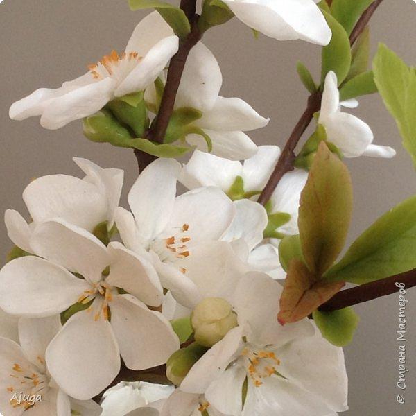 Цветущий хеномелес или Японская айва из холодного фарфора. фото 9