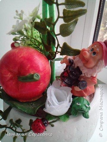 Моя яблонька фото 4