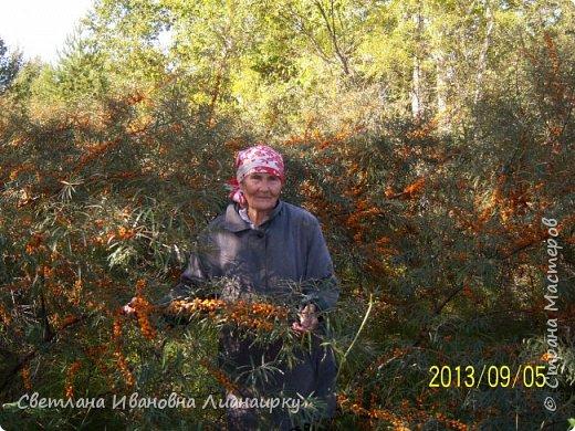 в 13 году оплели цветочные клумбы ивой. благо наша дача на берегу реки фото 16