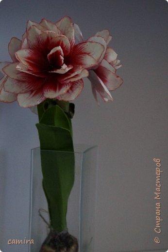 Привет) Я к Вам со своим новым цветочком) фото 2