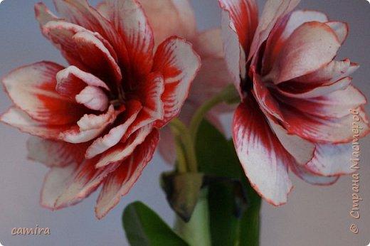 Привет) Я к Вам со своим новым цветочком) фото 3