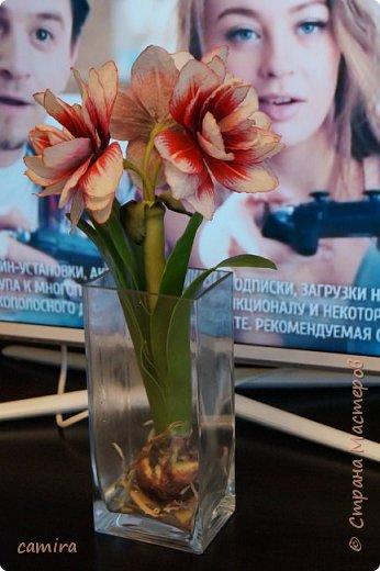 Привет) Я к Вам со своим новым цветочком) фото 8