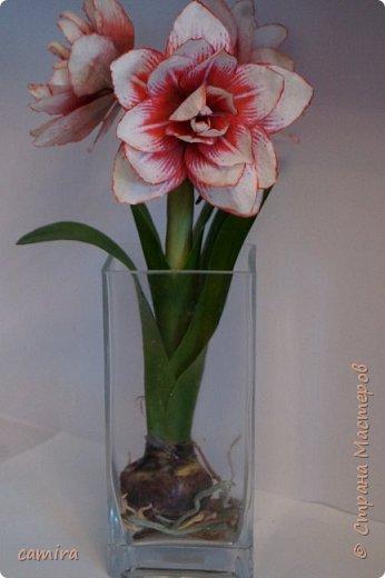 Привет) Я к Вам со своим новым цветочком) фото 5
