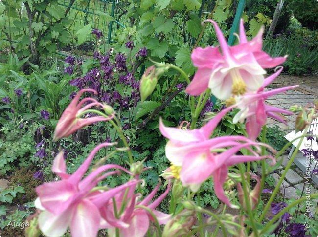 Ой, цветёт калина... фото 3