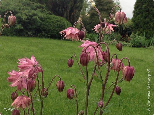 Ой, цветёт калина... фото 8