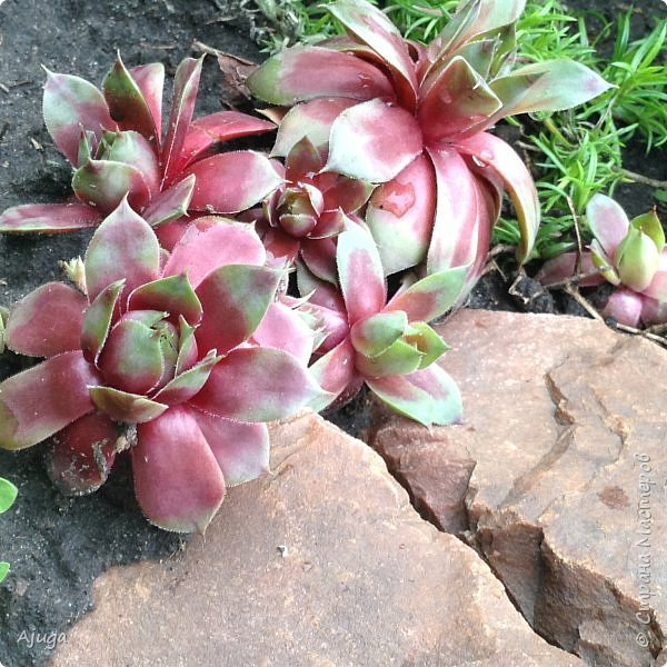Ой, цветёт калина... фото 17