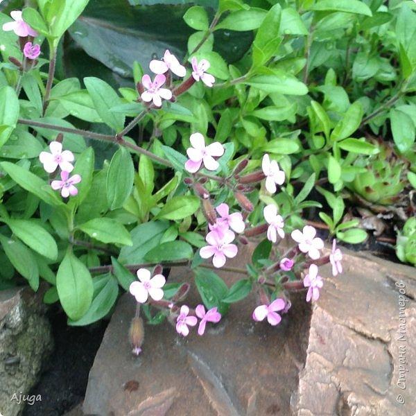 Ой, цветёт калина... фото 18