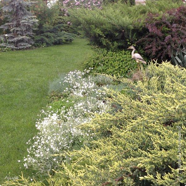 Ой, цветёт калина... фото 23