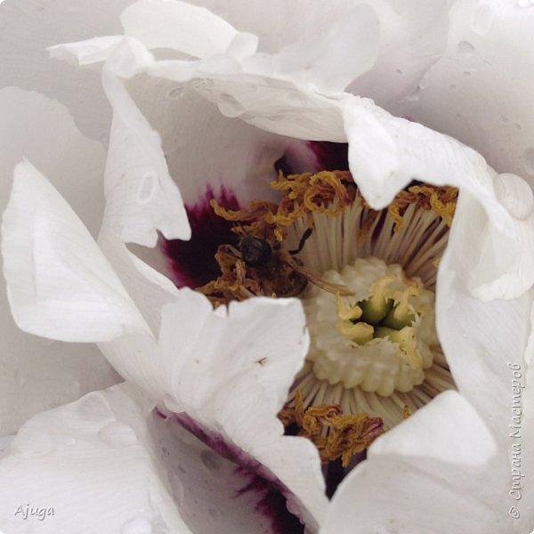 Ой, цветёт калина... фото 26