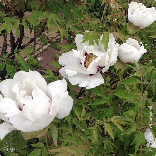 Ой, цветёт калина... фото 29