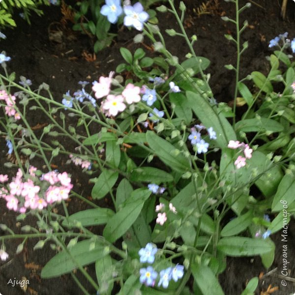 Ой, цветёт калина... фото 31