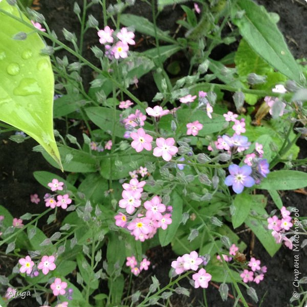 Ой, цветёт калина... фото 32