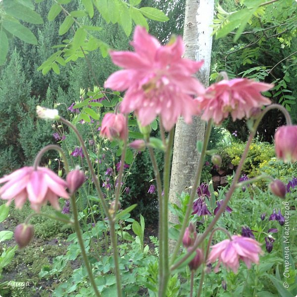 Ой, цветёт калина... фото 6